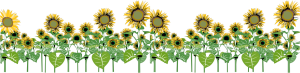 Sunflower Graphic