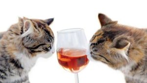 cats wine.jpg.653x0_q80_crop-smart