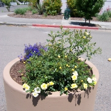 Traffic diverter planters maintained by St. Rose volunteers.