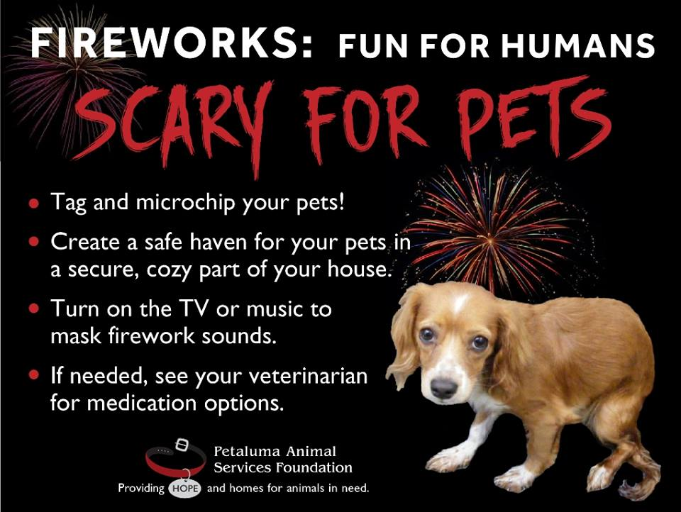 Dog And Fireworks Video